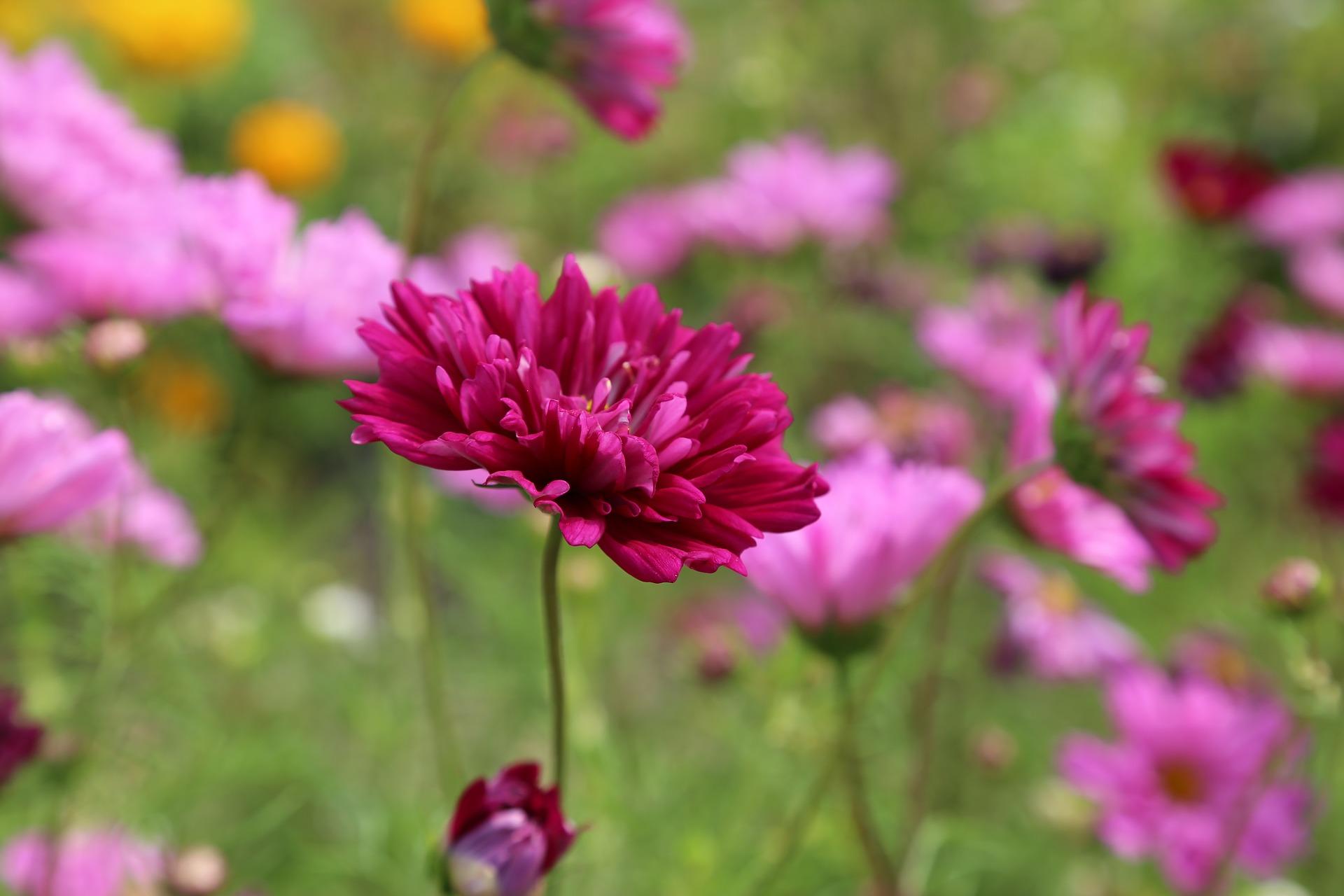 flower-408833_1920